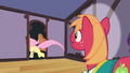Fluttershy runs out of Sugarcube Corner S4E14.png