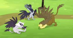 Griffons training