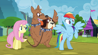Rainbow Dash's way forward is clear S4E22