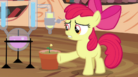 "Apple Bloom ""of this potion-makin'"" S4E15"