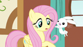 Fluttershy incoming bunny S3E13.png