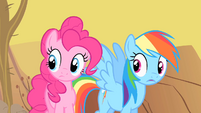 Pinkie Pie and Rainbow Dash astonished by Spike's rapport with the buffalo S1E21