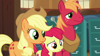 Apple siblings enter Ponyville Town Hall S7E13