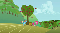 Rainbow Dash & Pinkie bucking apples S1E4
