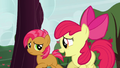Apple Bloom 'Great!' S3E08.png