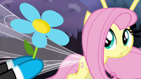 Fluttershy being given a flower S4E16
