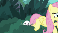Fluttershy racing out of the bushes S8E18