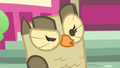 Owlowiscious gives an inquisitive hoot S4E23.png