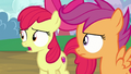 "Apple Bloom ""what do you mean?"" S7E6.png"
