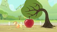 Applejack smiling at the apple S4E7
