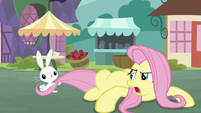 Bunny Fluttershy pulling on Angel's tail S9E18