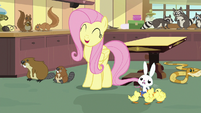 """Fluttershy """"you'll have all your ducks in a row!"""" S7E5"""
