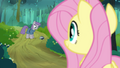 Fluttershy looking at Maud S4E18.png