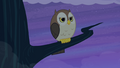 Owl with stern expression S4E07.png