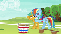 Rainbow Dash --with you on the team-- S6E18