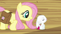 """Fluttershy """"Three times"""" S03E11.png"""
