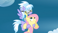 Fluttershy and Cloudchaser meet again S3E07.png