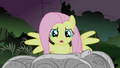Fluttershy looks at Twilight's rock solid body S1E17.png