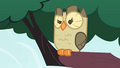 Owlowiscious eyebrow raise S4E23.png