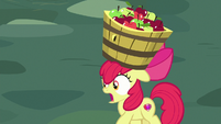 "Apple Bloom ""look out!"" S8E12"
