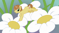 Feather Bangs jumping from flower to flower S7E8.png