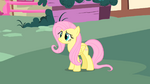 Slightly confused Fluttershy S1E17
