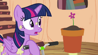 Apple Bloom giving Twilight a flower S4E15