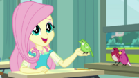 "Fluttershy ""surely you can tell the difference"" EGDS10"