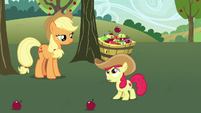 Apple Bloom catches apples in her bucket S7E9