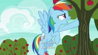 Rainbow Dash --offense...-- S6E18