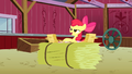 Apple Bloom looking at all the RVSP S3E8.png