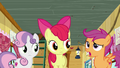 Apple Bloom and Sweetie Belle listening to Scootaloo S6E4.png