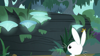 Bunny Fluttershy facing a large log S9E18