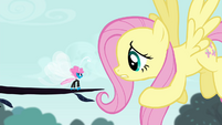 "Fluttershy ""one tiny acorn is a threat"" S4E16"