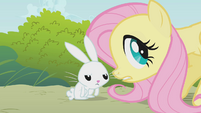 Fluttershy and Angel -you need some water-- S1E07