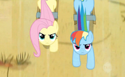 Fluttershy and Rainbow Dash pulling the cart S2E14