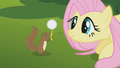 Fluttershy thanks squirrel S01E10.png