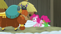 Pinkie Pie feels the earth still shaking S7E11