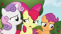 Apple Bloom --can a griffon even get a cutie mark--- S6E19