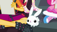 Angel Bunny bounces around the Equestria Girls EGDS6