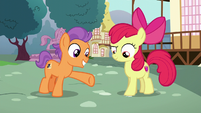 Apple Bloom does two simple hoof taps S6E4