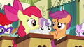 "Scootaloo ""that is a lot of work"" S6E14.png"