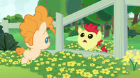 Young Bright Mac whispering to Pear Butter S7E13