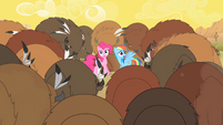 Buffalo surround Pinkie and Rainbow Dash S1E21