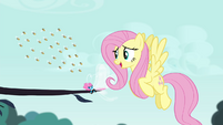 Fluttershy -back off my Breezie friend- S4E16