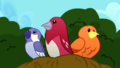 Nesting birds looking confused SS10.png