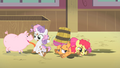Cutie Mark Crusaders farm S1E18.png