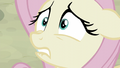 Fluttershy very nervous S5E02.png