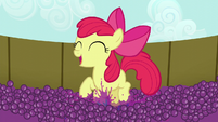 Apple Bloom happily squishing grapes S5E17