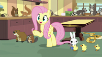 """Fluttershy """"I already have the perfect solution"""" S7E5"""